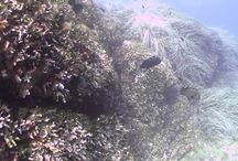 video / Alcuni dei più bei video girati all'Elba! Some of the most beautiful videos shot at Elba!