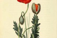 Graphic - Botanical