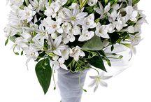 ramos novia flores silvestres
