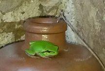 Granhota / Une bien sympathique grenouille
