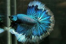 Fish that I want