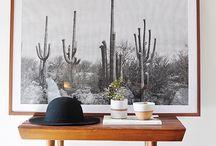 Cactus/Succulent obssesion