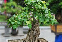 GARDEN // bonsai