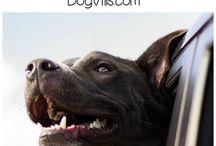 Fajne rzeczy dla psów