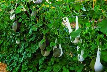 Pomysły do domu i ogrodu