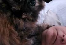 Instagram https://www.instagram.com/p/BTHAV3vjnIT/ April 20, 2017 at 09:50AM #catsofinstagram #jade Getting a kitty hug early in the morning. #recovery #kneepain