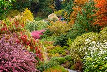 Grădina toamna