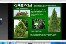 Per Garden Designers / Lezione tipologia delle piante nelcorso di Garden Designing di Csp resourcing