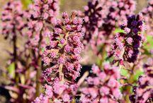 Pink Flowering Pond Plants