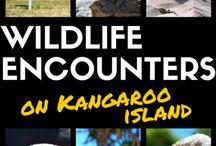 Australia / Most amazing places in Australia for Travelers!