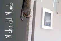 Gatos jugetes