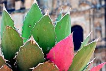 MEXICO / by Linda Ketelhut