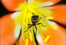 Macro Photography. / Macro photography - the parts of the world we don't see much of.