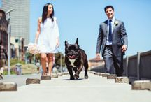 Dogs and Weddings / Do you love dogs as we do?