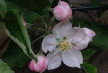 Bloemen en planten / Vastgelegde kleur en fleur in de natuur.