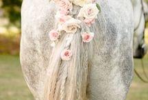 Horse ♡