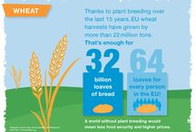 EU Plant Breeding Infographics / Learn about the socio-economic and environmental value of plant breeding in the European Union (EU) over the last 15 years. The following infographics encompasses all plant breeding and are not specific to GMOs. / by GMO Answers