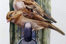 Birds - Sparrows