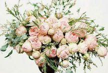 PÜNKÖSDI Rózsa-Rózsa