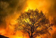 arbre/foret