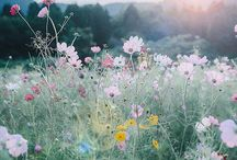 wild flowers and plants