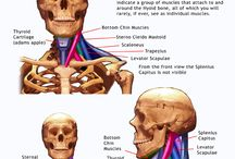 Anatomy for Sculpture - The Human Neck