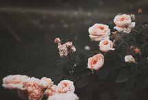 ::Roses::