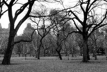 NEW YORK TREES / photos divers de New York avec pour thèmes la verdure.