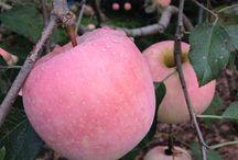 Pink Autumn Fairytale