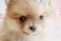 Dogs / Cute dogs & puppies!   Ditatime.weebly.com