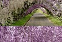 Flower park in the world