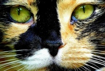 Cats / by Rebby Quintanilla