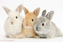 Alcombe Cares for ... RABBITS! / Alcombe loves looking after your Beautiful Bunnies.
