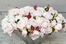 ADR Rosen - Schönheiten mit Auszeichnung // ADR Roses - Beauties with distinction / Es erübrigt sich bei den ADR-Sorten, der Einsatz von Pflanzenschutzmitteln; gleichzeitig sind die umfassenden Sorten sehr frosthart und blühfreudig. Kordes-Rosen bietet mittlerweile über 70 Sorten mit ADR-Prädikat an – kein anderer Züchter hat mehr!  Needless the use of pesticides at the ADR-Roses; at the same time comprehensive varieties are very hardy and floriferous. Meanwhile Kordes Roses offers more than 70 varieties with ADR predicate - no other breeder has more!