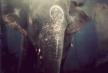 ✨ INDIA ✨