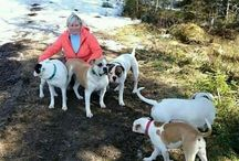 Me and the bulldogs