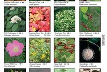 landsc-shrubs