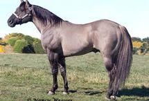I love horses / Horses and dressage