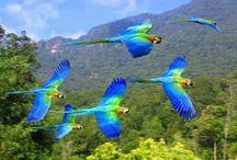 zdjęcia ptaki
