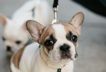 | puppies | / Cuties