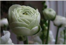 Bloemenwinkel  / Bloemist van Gurp heeft een  sfeervol ingerichte bloemenwinkel in Breda.  In de bloemenwinkel ziet en ruikt u een assortiment van kleurrijke en dagverse bloemen. Rozen uit Ecquador, tulpen uit Frankrijk en de mooiste seizoensbloemen van dit moment. Verder heeft Bloemen Van Gurp een grote collectie aparte vazen en potten en een prachtig assortiment houtdecoraties. Neem een kijkje in onze sfeerwereld vol mooie bloemen, planten en potten... Van Gurp, uw bloemist in Breda, sinds 1848.