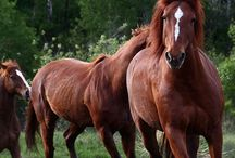 Horse Facebook Covers
