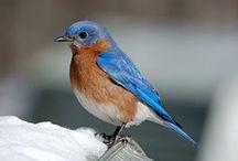 Beautiful Birds / by Theresa Bowers