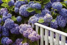 Leefplezier van bloemen worden mensen vrolijk. / Mooie Bloemen.