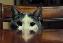 Żywienie kotów / Wszystko o żywieniu kotów
