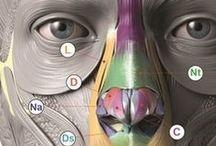 Tutorial de anatomia