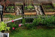Garden | Veg
