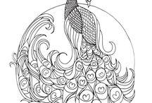 Peacock / Peacock