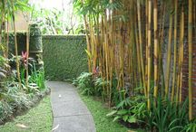 Privacy bamboo garden effect