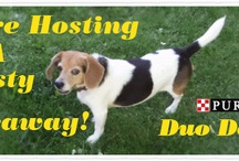 Wagging Giveaways and Contests / Sniffing out the best wagging giveaways and contest for howling dogs and cool cats